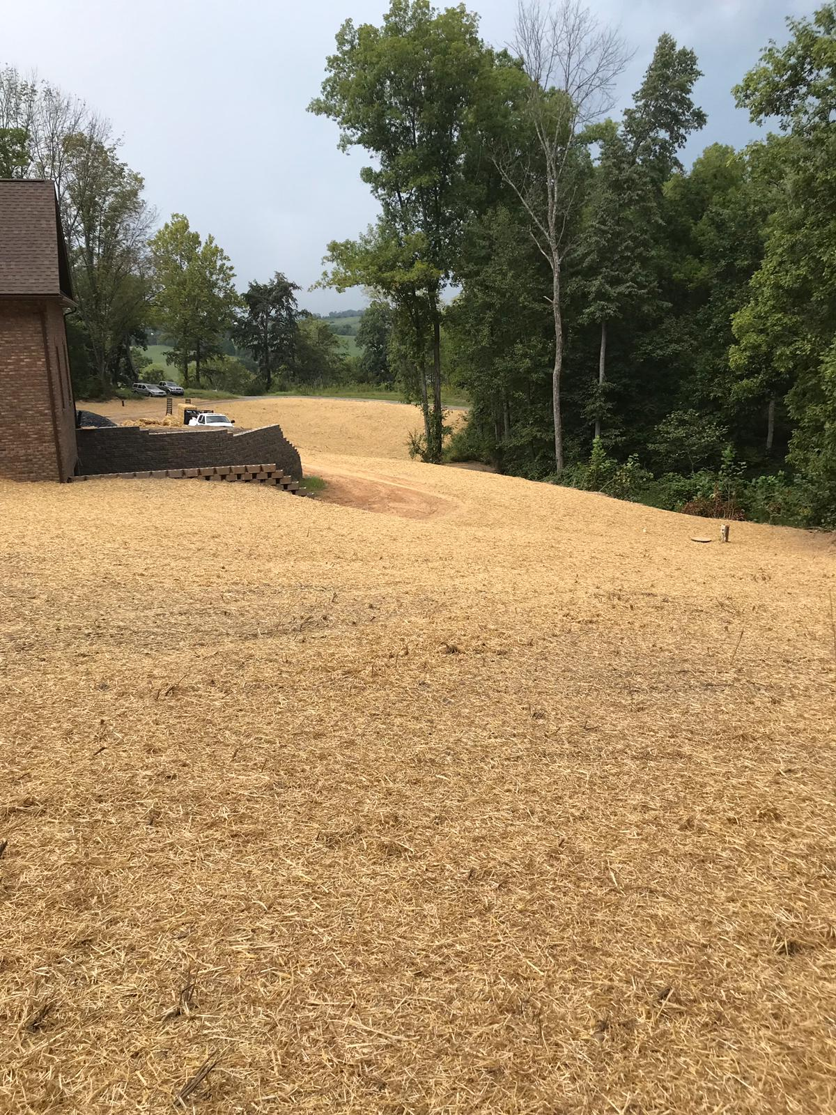 Seeded Lawn